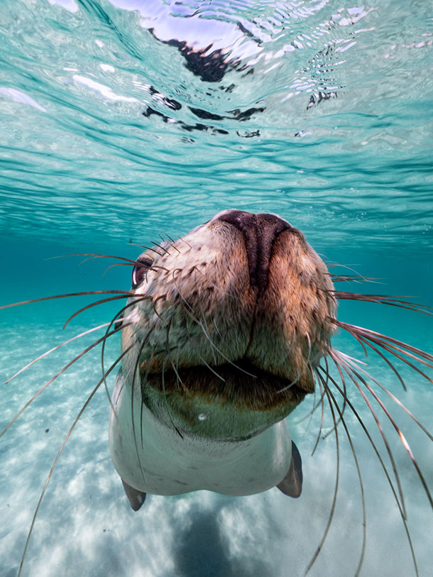 Snorkel with Seal Lions